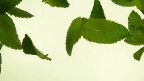 Close up fresh green mint leaves in tea. Close up several fresh green mint leaves floating in tea with air bubbles, low angle side view, slow motion stock video footage