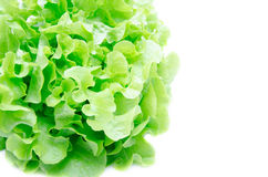 Close up fresh green organic vegetable Royalty Free Stock Photo