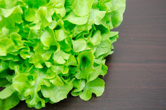 Close up fresh green organic vegetable on the wood Stock Image