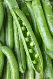 Close-up of fresh green pea pods with water drops. Stock Photo