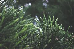 Close-up of Fresh Green Plant royalty free stock images