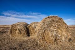 Close up of fresh hay bundles. Stock Photos