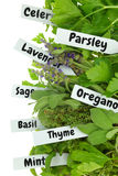 Close up of fresh herbs Stock Photography