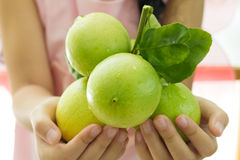 Close up of fresh limes Royalty Free Stock Images