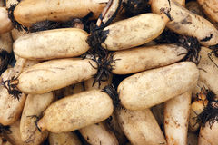 Lotus roots Stock Photography