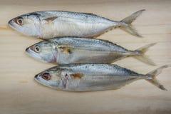 Close up fresh mackerel fish on wood background,  seafood market. Close up fresh mackerel fish on wood background,  seafood market Royalty Free Stock Photo
