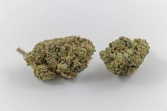 Fresh marijuana buds stock images