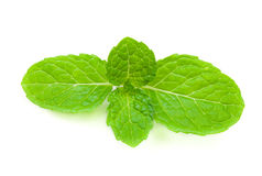 Close up fresh mint. Close up fresh mint Isolated on white Background Royalty Free Stock Photo