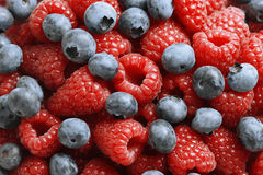 Close-up of fresh mixed berries. Delicious blueberries and red raspberries seen close up - large XXL file shot in studio Royalty Free Stock Photography