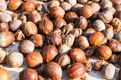 Close-up of fresh nutmeg mace seed being dried under sun Stock Photos