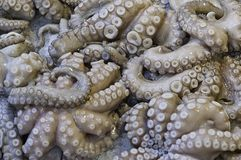 Fish market octopus stock photography
