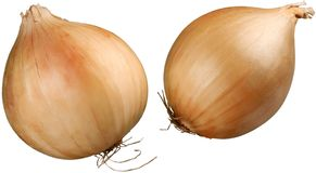Close-up of fresh onions isolated on white. Close-up fresh onions yellow group white background Stock Photos