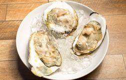 Close up of Fresh opened oyster offered as top view on crushed ice in white dish on wood table. Close up of Fresh opened oyster offered as top view on crushed Stock Images