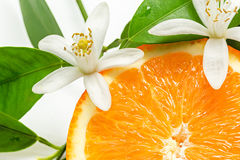 Close up of fresh orange fruit with leaves and blossom royalty free stock image