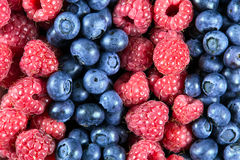 Close up Fresh Organic  Blueberries and Raspberries. Rich with vitamins Background, texture Royalty Free Stock Images
