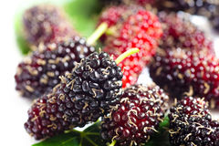 Close up fresh organic mulberries, shallow depth of field Royalty Free Stock Photo