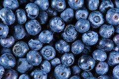Close up Fresh Organic picked Blueberries. Rich with vitamins Background, texture Stock Photography