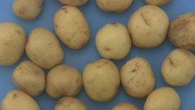 Close up of fresh organic potatoes rotating on a blue  background. stock video footage