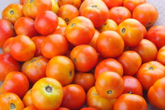 Close up of Fresh Organic tomatoes . Fresh Organic tomatoes served in plate Stock Photography