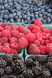 Close-up of fresh, organically grown berries. Raspberries, blueberries, and blackberries Stock Photography
