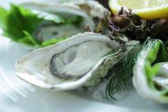 Close up Fresh Oyster Stock Photos