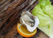 Close up of fresh oysters lettuce Stock Photo