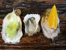 Close up of fresh oysters lettuce Stock Images