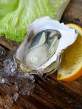 Close up of fresh oysters Stock Photos