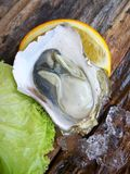 Close up of fresh oysters Stock Image