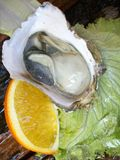 Close up of fresh oysters Stock Photo