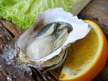 Close up of fresh oysters Royalty Free Stock Image