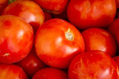 Fresh picked organic red tomatoes Stock Photo