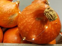 Close up on a fresh pumpkin with glowing lights royalty free stock photos