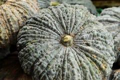 Close up of fresh pumpkin at the market Stock Image