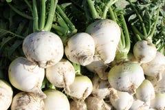 Radish. The close-up of fresh radish ready for sale Royalty Free Stock Image