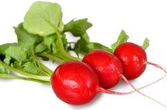 Close up of fresh radishes. Isolated on white background Royalty Free Stock Images