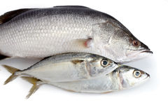 Close-up of Fresh Raw Fish. On white background Stock Images