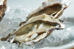 Close up fresh raw oyster on a plate Royalty Free Stock Photography