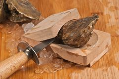 Close up of Fresh, raw oyster in wood grip. Close up of Fresh, raw, just caught oyster in a wood oyster grip with a oyster knife with chipped ice on a wood Stock Images