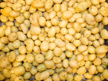Close-up of a fresh raw potatoes background Stock Images