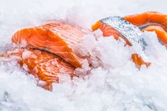 Close-up Fresh raw salmon fillets on Ice Royalty Free Stock Image