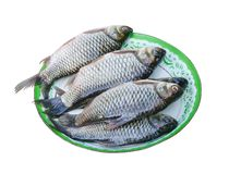 Fresh raw siamese mud carp or white fish group on green tray , nature fresh water patterns isolated on white background with. Close up Fresh raw siamese mud carp stock image