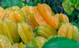 Close up of fresh and raw  Star Apple Royalty Free Stock Images
