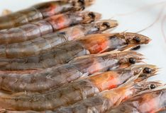 Close-up of fresh, raw and whole prawns. stock photo