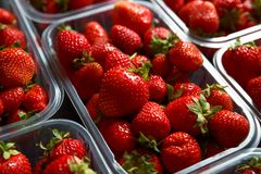 Close up of fresh red ripe strawberries in transparent plastic container boxes stock image