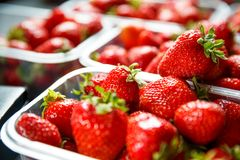 Close up of fresh red ripe strawberries in transparent plastic container boxes stock photo