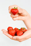 Close up of fresh red strawberries with green leaves in woman hand Royalty Free Stock Images