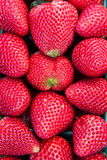 Close up of Fresh ripe Strawberries. Close up of fresh red ripe strawberries in vertical rows Royalty Free Stock Image