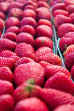 Close up of Fresh ripe Strawberries. Close up and looking down fresh red ripe strawberries in vertical rows Stock Photography