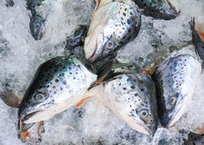 Close up of fresh salmon fish on open market.  stock photography